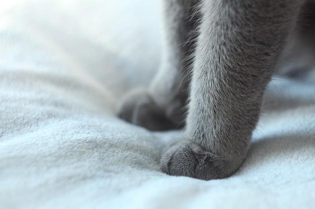 Sluit omhoog van grijze kattenpoten. detail dat van zachte kattenpoten is ontsproten.