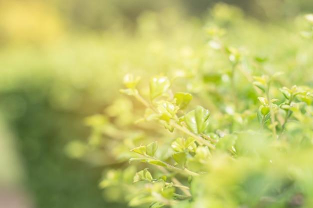 Sluit omhoog van groen blad op vage achtergrond in tuin