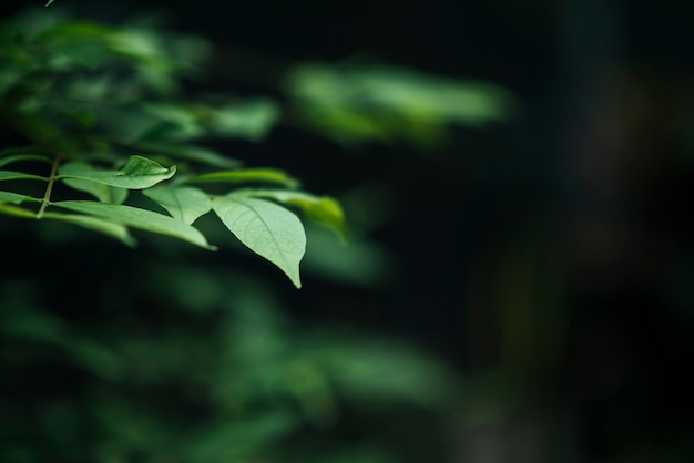 Sluit omhoog van groene bladeren op vage bladachtergrond.
