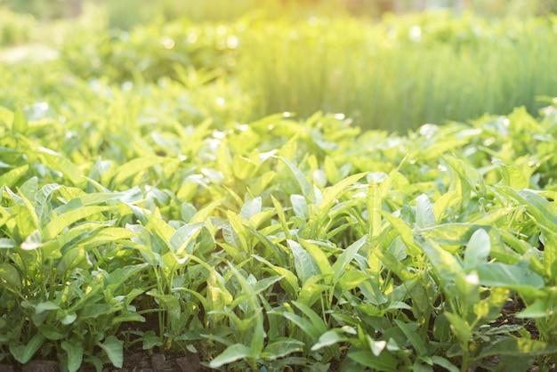 Sluit omhoog van groene bladmening van aard in organisch plantaardig landbouwbedrijf met zonlicht