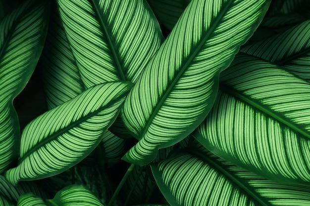 Sluit omhoog van groene bladtextuur in tropisch bos voor achtergrond en ontwerp van het de aardconcept van het kunstwerk het aardconcept.