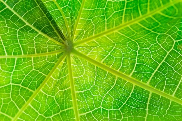 Sluit omhoog van groene bladtextuur voor patroon en achtergrond