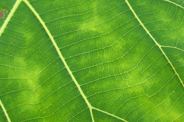 Sluit omhoog van groene bladtextuur