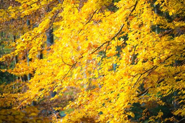 Sluit omhoog van grote wortel van zeer oude boom die door gele en groene bladeren wordt omringd