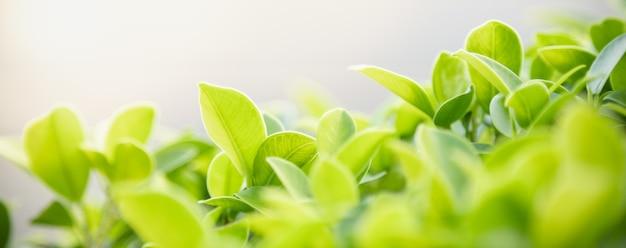 Sluit omhoog van het groene blad van de aardmening op vage groenachtergrond onder zonlicht met bokeh en exemplaar ruimteachtergrond natuurlijk installatieslandschap, het concept van de ecologiedekking.