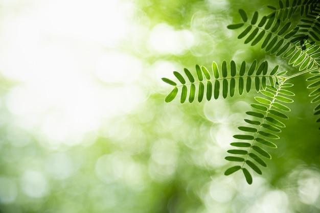 Sluit omhoog van het groene blad van de aardmening op vage groenachtergrond onder zonlicht met bokeh en exemplaarruimte gebruikend als achtergrond natuurlijk installatieslandschap, het concept van het ecologiebehang.