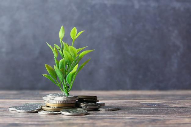 Sluit omhoog van het jonge plan groeien door muntstukken.