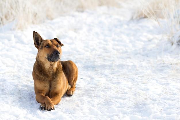 Sluit omhoog van hond in de sneeuw