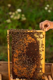 Sluit omhoog van imker die een honingraathoogtepunt van bijen houden