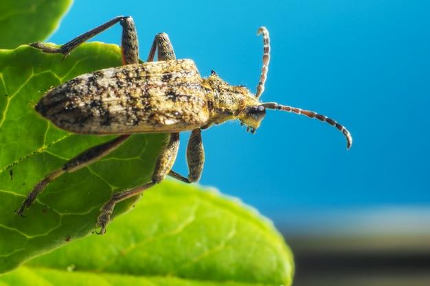 Sluit omhoog van insect met antennes op blad