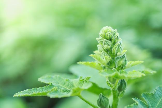 Sluit omhoog van jong aard groen blad op vage groenachtergrond onder zonlicht met bokeh en exemplaarruimte.
