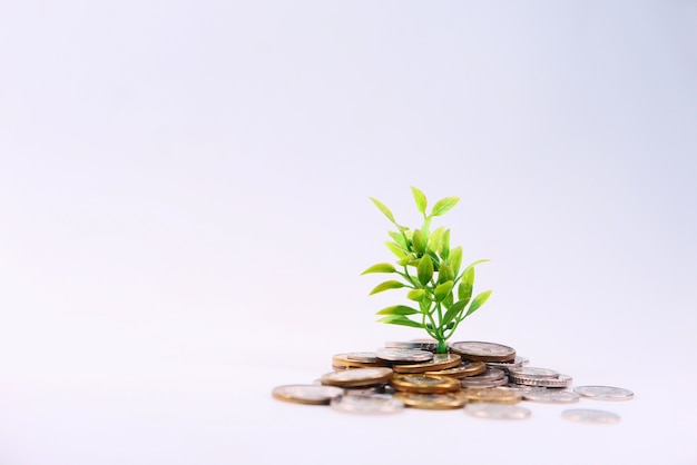 Sluit omhoog van jong plan dat door muntstukken groeit.