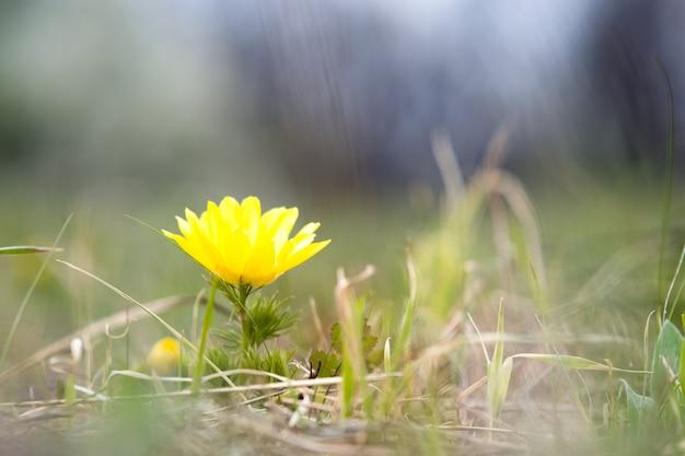 Sluit omhoog van kleine gele wilde bloemen die op groen de lentegebied bloeien
