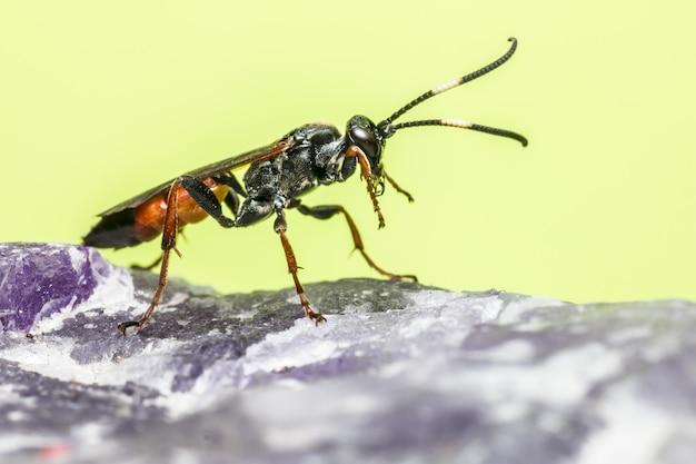 Sluit omhoog van kleurrijk insect met lange antennes