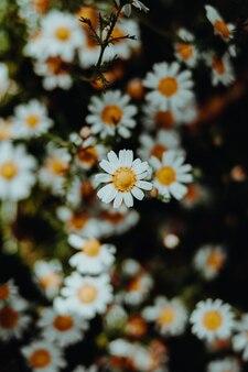Sluit omhoog van kleurrijke bloemen