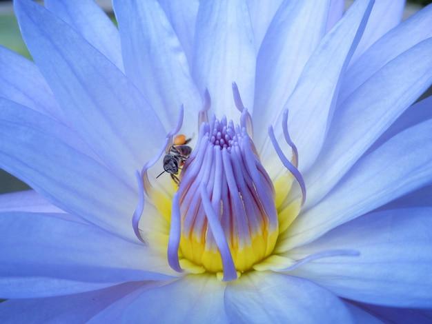 Sluit omhoog van lotus met weinig bij