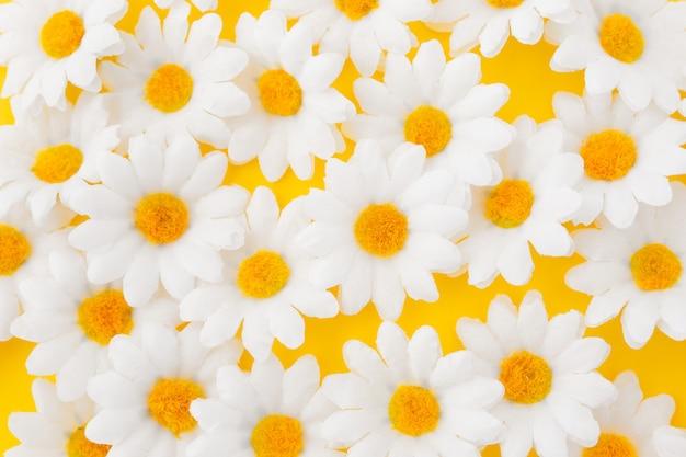 Sluit omhoog van madeliefjebloemen op gele achtergrond