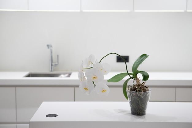 Sluit omhoog van orchidee of phalaenopsis in heldere moderne keuken met witte countertops