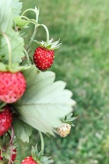 Sluit omhoog van rijpe aardbeien in de zomerboeket
