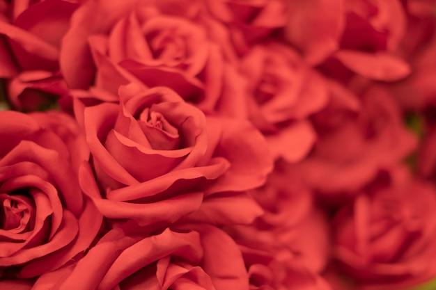 Sluit omhoog van rode rozen, de achtergrond van de valentijnskaartendag, huwelijksdag