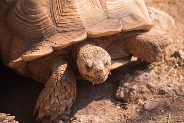 Sluit omhoog van schildpad in de kooi