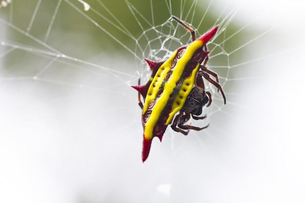Sluit omhoog van spinneweb met spin