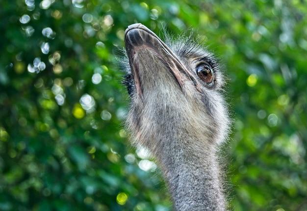 Sluit omhoog van struisvogelhoofd in aard