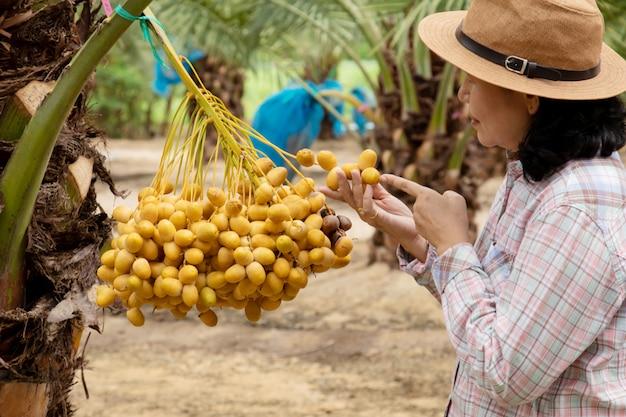 Sluit omhoog van tuinman die de aanplanting van dadelpalmen behandelen