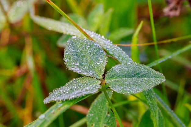 Sluit omhoog van vers dik gras met waterdalingen