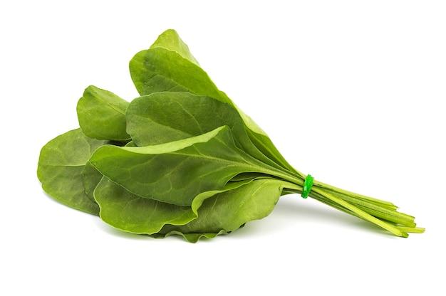 Sluit omhoog van verse groene spinazie die op witte oppervlakte wordt geïsoleerd