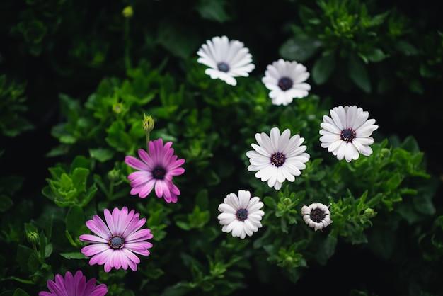 Sluit omhoog van verse mooie bloemen op groene achtergrond, aardconcept