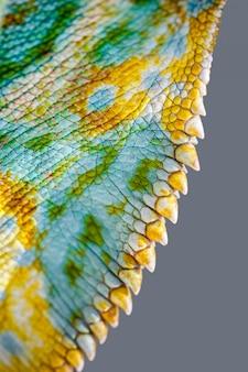 Sluit omhoog van vier-gehoornde kameleonhuid, chamaeleo-quadricornis