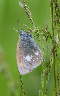 Sluit omhoog van vlinder op installatie