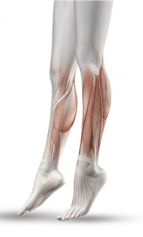 Sluit omhoog van vrouwelijke benen met gedeeltelijke spierkaart
