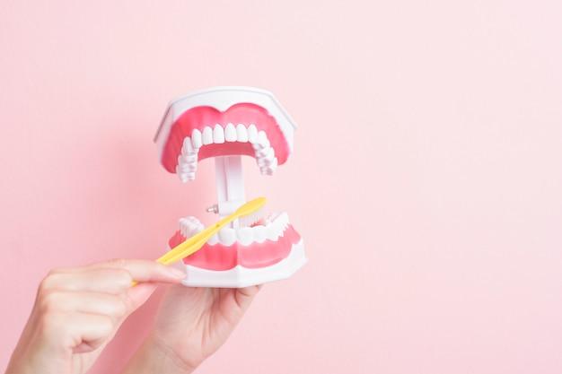 Sluit omhoog van vrouwenhand houdt kunstmatige modeltanden voor tand schoon demonstratie