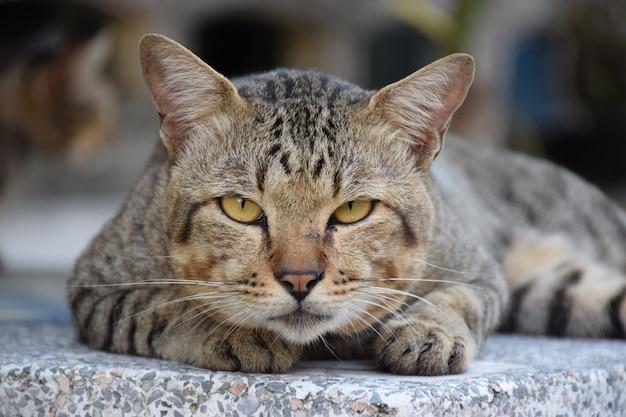 Sluit omhoog van zwarte grijze bruine kat bepalen en de achtergrond van de onduidelijk beeldmuur