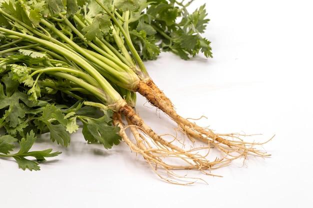 Sluit omhoog verse geïsoleerde korianderwortels