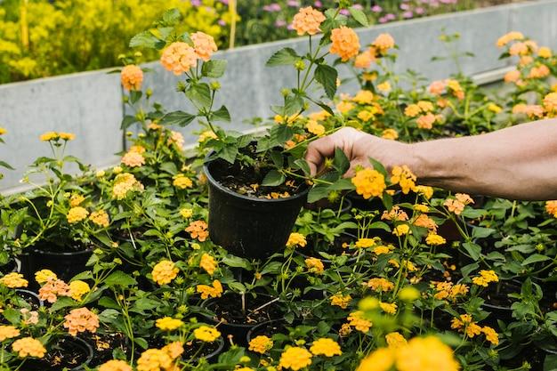 Sluit omhoog verwijderde bloem