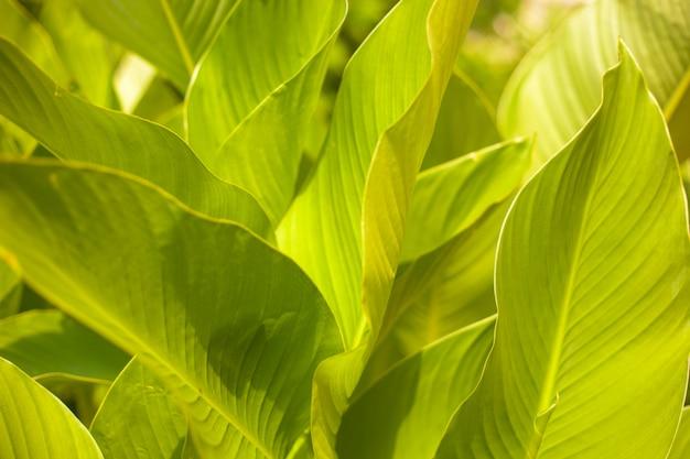Sluit omhoog weelderige tropische botanische bladeren