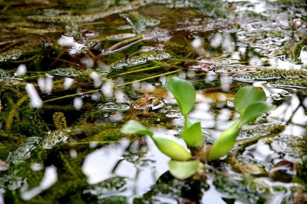 Sluit schot van groene planten in het water