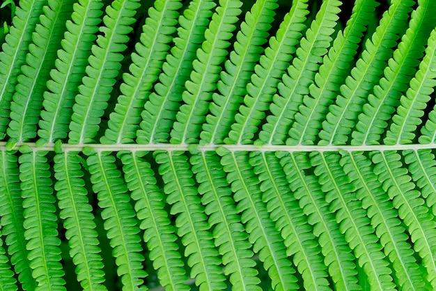 Sluit u pon heldergroene fern blad textuur