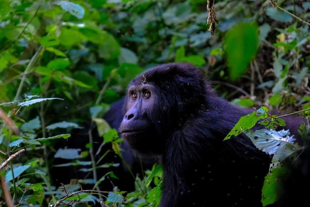 Sluiten schot van een gorilla in de buurt van planten