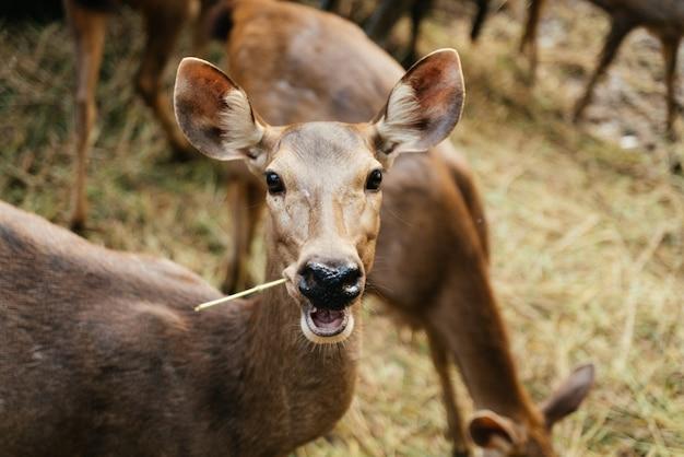 Sluiten shot van een hert eten