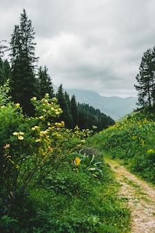 Smal pad in de bergen tussen het bos, op een sombere en bewolkte dag met een mystieke sfeer