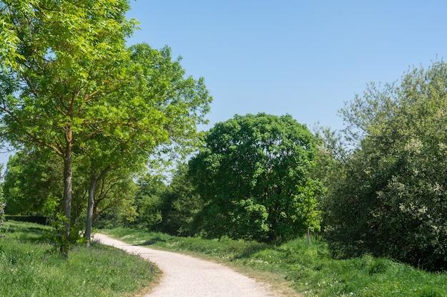 Smal pad omgeven door een bos van groene bomen in een park onder een blauwe lucht