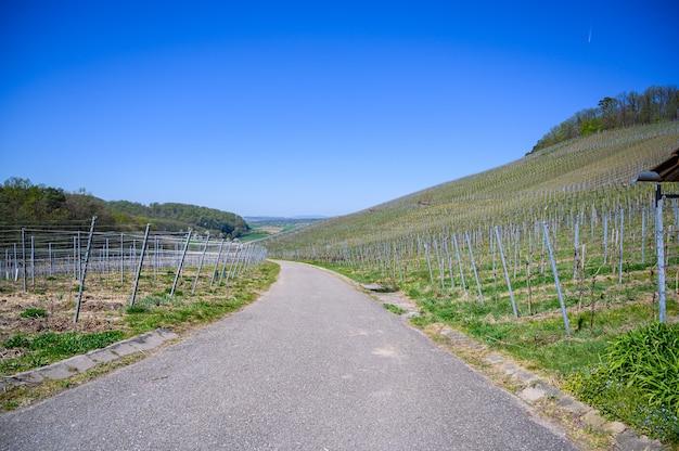 Smalle asfaltweg die door de met gras bedekte velden onder de blauwe lucht gaat