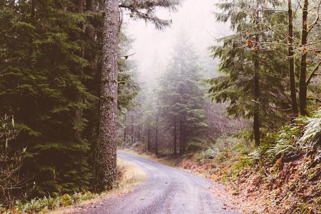 Smalle bochtige weg in het midden van het bos