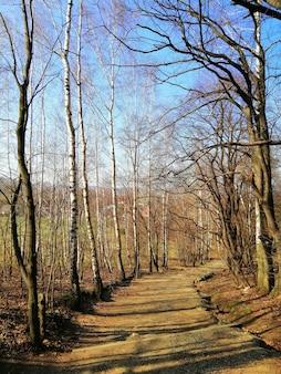 Smalle loopbrug in het bos vol met naakte bomen in jelenia góra, polen