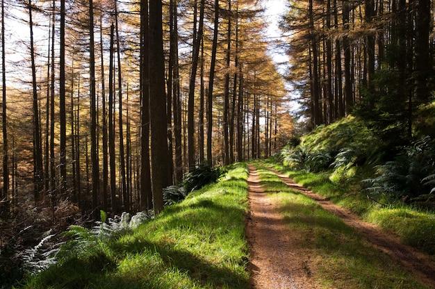 Smalle modderige weg in een bos met hoge bomen