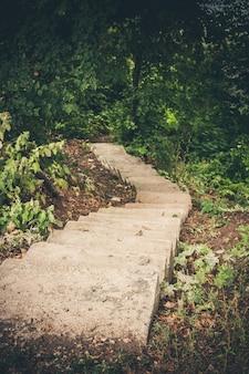 Smalle stenen trap, verdwijnend in de diepten van het bos naar beneden.